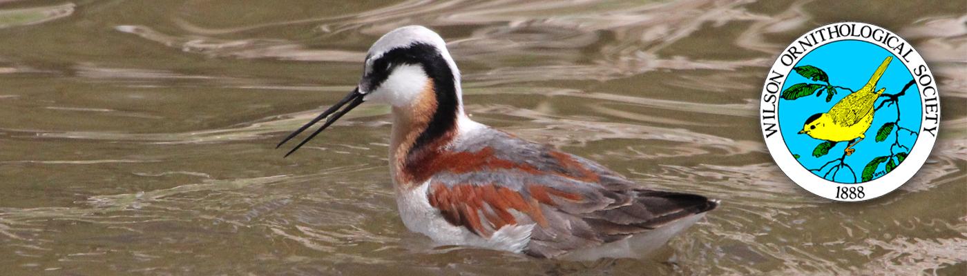 Wilson Ornithological Society